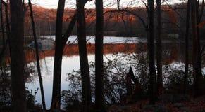 Träd och vegetation på den Harriman delstatsparken New York arkivbild