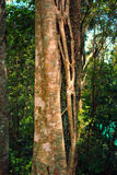Träd och vinrankan Arkivfoton