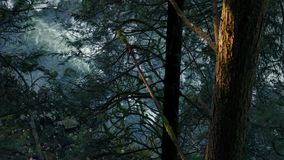 Träd ovanför floden i aftonsolljus arkivfilmer