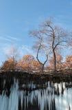 Träd ovanför istappar av den djupfrysta vattenfallet Arkivbild