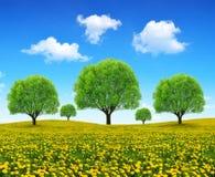 Träd på äng med maskrosor Arkivbild