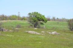 Träd på ön av Khortytsya i Zaporozhye Arkivbild