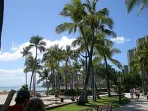 Träd på ön av Oahu Hawaii Fotografering för Bildbyråer