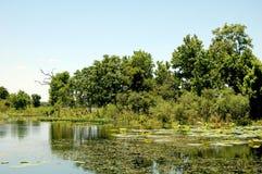 Träd på ön i träsket Texas Royaltyfria Foton