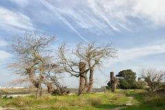 Träd på övergiven lantgård med mjuk molnig himmel Royaltyfri Foto