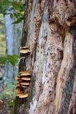 Träd på att gå slingan Arkivfoto