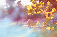 Träd på bakgrund för abstrakt begrepp för soluppgångsolbristning Drömlikt begrepp den filtrerade bilden är retro Arkivfoton