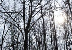 Träd på bakgrunden av himlen royaltyfria bilder