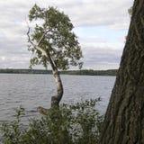 Träd på bakgrunden av sjövattnet Arkivbild