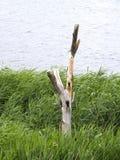 Träd på bakgrunden av sjövattnet Royaltyfria Bilder