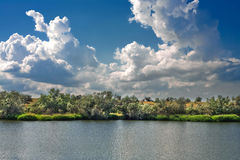 Träd på banken av floden Royaltyfria Foton
