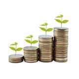 Träd på begrepp för pengartillväxt i affär Arkivfoto