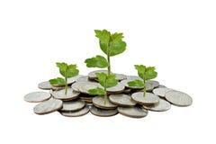 Träd på begrepp för pengartillväxt i affär, mynt på den vita backgroen Arkivfoto