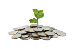 Träd på begrepp för pengartillväxt i affär, mynt på den vita backgroen Royaltyfria Foton