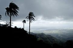 Träd på bergöverkant Arkivbilder