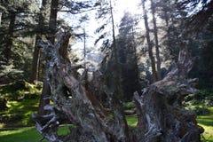 Träd på bergiga dalar Arkivbild