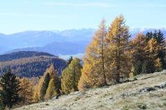 Träd på bergsida Royaltyfri Foto
