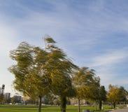 Träd på blåsig dag royaltyfria foton