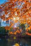Träd på Central Park Arkivfoto