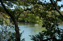 Träd på Central Park New York City Arkivfoto