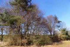 Träd på Crookham, Northumberland, England UK Royaltyfri Fotografi
