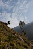 Träd på den Annapurna baslägertreken, Nepal Arkivfoto