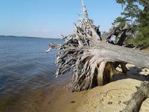 Träd på den Chactawhatchee fjärden arkivfoton