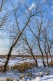 Träd på den djupfrysta sjön Royaltyfri Fotografi
