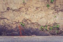Träd på den gamla antika tegelstenväggen arkivbilder