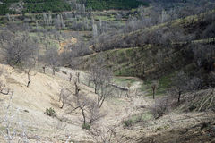Träd på den gröna kullen Royaltyfri Foto