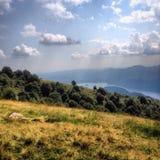 Träd på den gröna kullen Royaltyfri Fotografi
