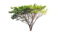 Träd på den isolerade naturen Arkivbild