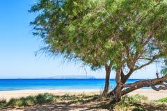 Träd på den lösa tropiska stranden Arkivbild