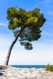 Träd på den medelhavs- kusten Royaltyfri Foto