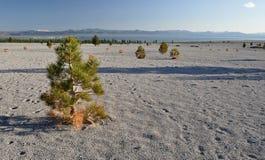 Träd på den mono sjön arkivbilder
