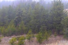 Träd på den Muskegon delstatsparken Royaltyfria Bilder