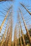 Träd på den Namiseom ön Royaltyfri Foto