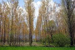 Träd på den plogade jorden Arkivbild