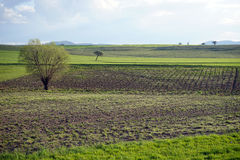 Träd på den plogade jorden och bergen Arkivbilder