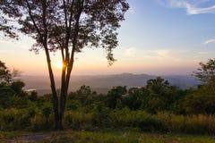 Träd på den Thailand solnedgången royaltyfri fotografi