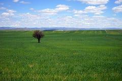 Träd på det gröna gräset Arkivbild