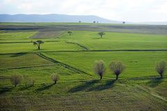 Träd på det gröna gräset och mountaiunen Arkivfoton