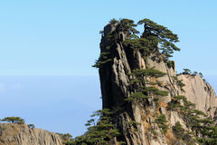 Träd på det Huangshan berget Kina Royaltyfria Bilder