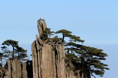 Träd på det Huangshan berget Kina Arkivfoton