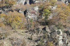 Träd på det steniga berget i Georgia royaltyfri foto