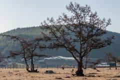 Träd på en bakgrund av berg med trägamla hus Med härlig rök från lampglasen royaltyfri bild