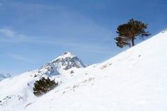 Träd på en berglutning Arkivfoton