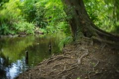 Träd på en flodstrand arkivfoton
