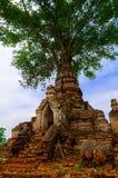 Träd på en gammal tempel royaltyfri fotografi