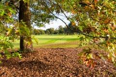 Träd på en golfbana i höst arkivbild